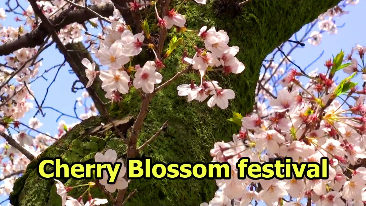 Japan Flower Festival Festival Flower Viewing