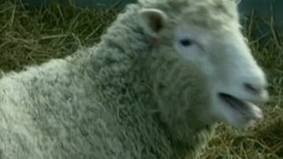 1996: Dolly the sheep cloned