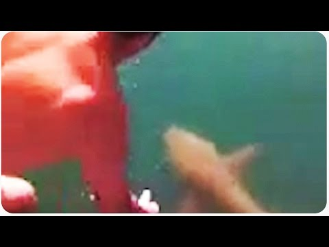 Man Jumps On Tiger Shark | Guy Chooses Dare