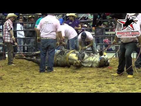 !POR PRIMERA VEZ EN USA: TOROS DE PISO! Rancho Los Terribles en el Odeum (1080p HD)