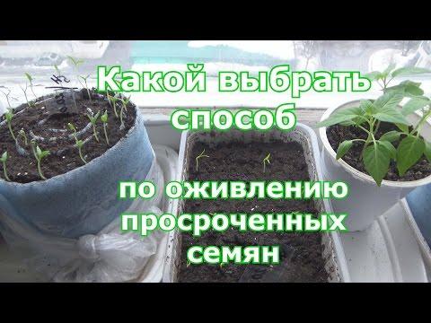 Оживление просроченных семян. Сравниваю пять способов пробуждения старых семян
