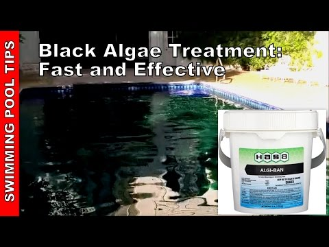 Black algae treatment get rid of black algae in your pool how to make do everything for Kill black algae swimming pool