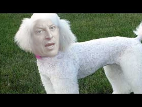 Police Re-open Investigation Into Al Gore Sex Poodle Claims video