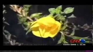 Flower Miracle - Bloom When hear the Azan - CNN