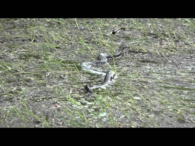 змеи на рыбаке
