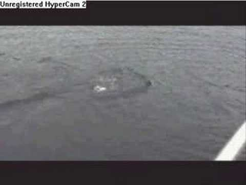 Real LochNess Monster Sighting - YouTube Real Sightings Of Monsters