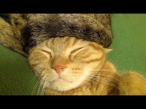 変わった帽子を被って寝て...