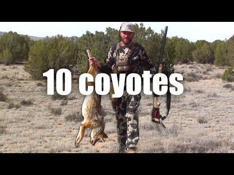 10 Coyotes in March 2 day Hunt