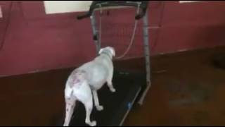 Training   Behind the scenes look at our daycare room   Solid K9 Training Dog Training