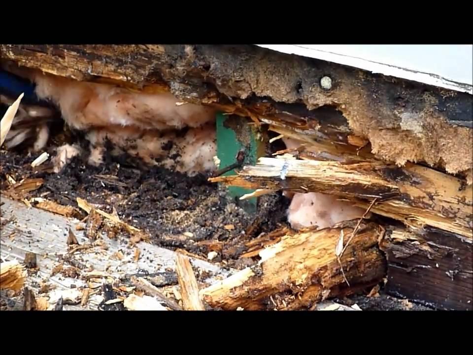 extermination fourmis charpenti youtube. Black Bedroom Furniture Sets. Home Design Ideas