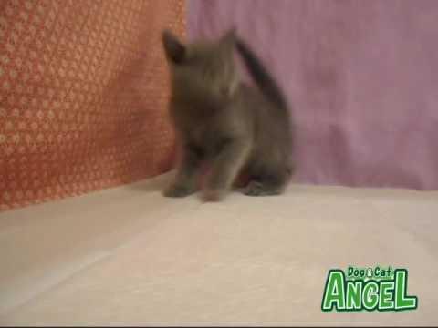 1606115 【ペットショップ エンゼル】お薦めの子犬・子猫
