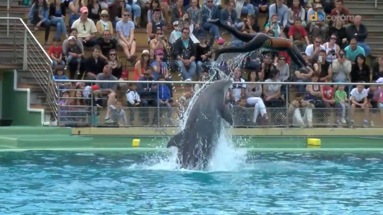 Rencontre avec les dauphins planete sauvage