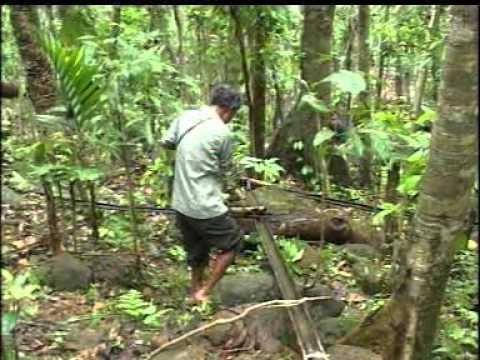 Bamboo Drip Irrigation System Of Meghalaya Youtube