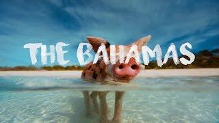 Swimming Pigs, The Bahamas