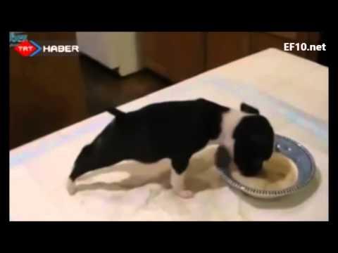 Yemek yerken kendini kaybeden yavru köpek