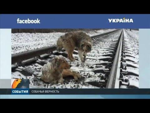 Трогательная история о собачьей дружбе на Закарпатье