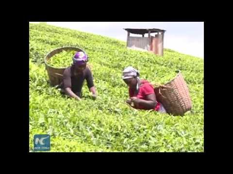 Chinese firm introduces new technology to enhance food production for Africa