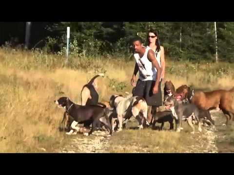 YOU LEAD THE WAY!! Ran over by 17 Pitbulls