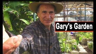Gary's Garden Winter Vegetables Tons of Greens Growing in Woodchips Kale Bannanas