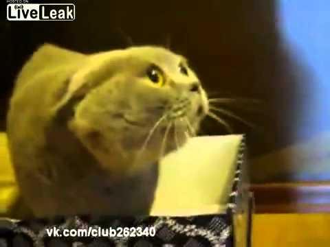 おそろしい声をだしてしゃべる猫