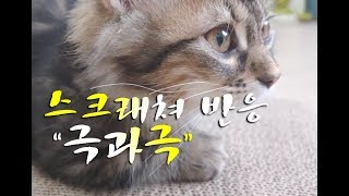 새로운 스크래쳐 ASMR! 반응이 극과극이네요! cat scratcher reaction 猫スクレチョ反応