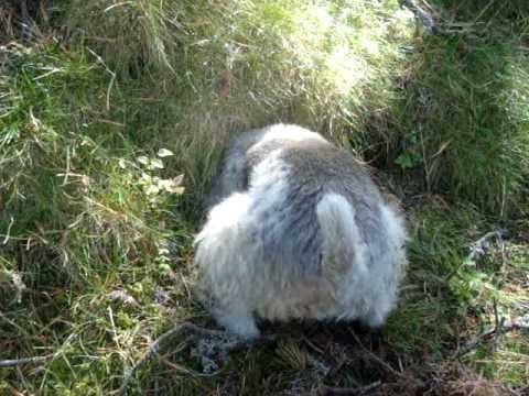 Especies raras en el bosque youtube for Cosas insolitas e increibles