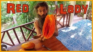 THE BEST PAPAYA VARIETY IN THE WORLD: SUPERSWEET RED LADY