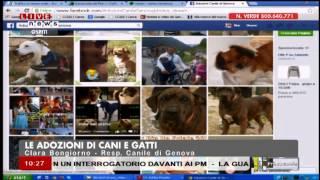 """2014 07 30 - Primocanale - Estratto dal programma """"L'agenda a 4 zampe"""""""