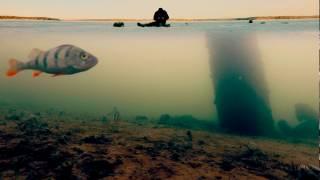 Зимняя рыбалка 2016-2017. Окунь в коряжнике на мормышку