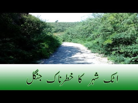 Dangerous Jungle In Pakistan | Attock City | Attock.