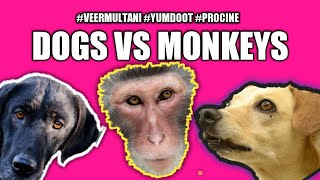 #Monkey VS #dogs fight on. animal lovers don't watch (sply usa canada) 🐵🐕pls share🐶🐒