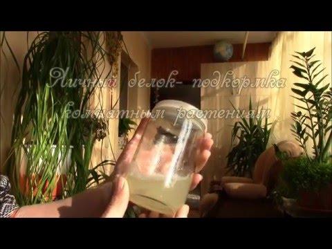 Яичный белок   подкормка для комнатных цветов