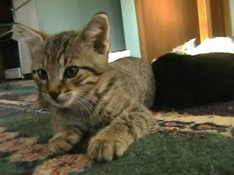 Very Shy Kitten Even More Camera-shy Kittens
