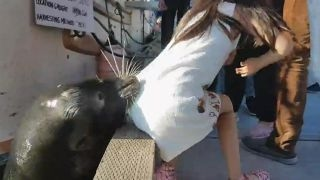 Dramatic video of sea lion dragging girl off pier goes viral