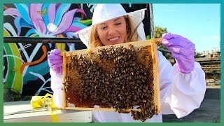 How do bees find food in the city? Urban Beekeeping and Hive Mind:  | BBC Earth Unplugged