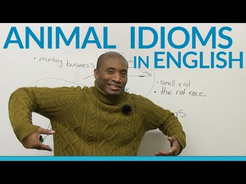 Animal idioms and expressions in English