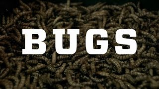 Bugs – Official Trailer