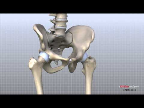 Hip Anatomy Animated Tutorial