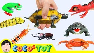 한국어ㅣ징글징글 R/C 장난감 모여라! 어린이 동물 만화, 곤충이름ㅣ꼬꼬스토이