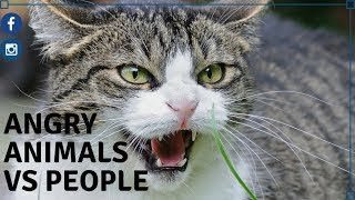 Extremely Funny, Angry Animals vs People