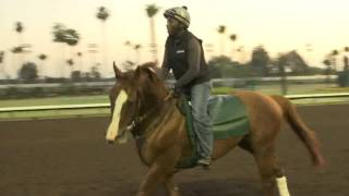 California Chrome is back on the track at Los Alamitos