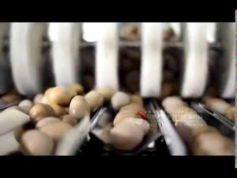 Мультиголовочный дозатор фасовка и упаковка в сетку картофеля свеклы корнеплодов