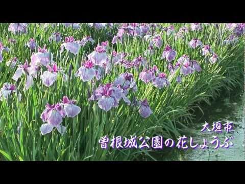 大垣市 「曽根城公園」 ~ハナショウブ~