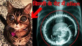 जानवरों के पेट से निकली अजीबोगीब चीजें।। weirdest and strangest things found in Animals in the world