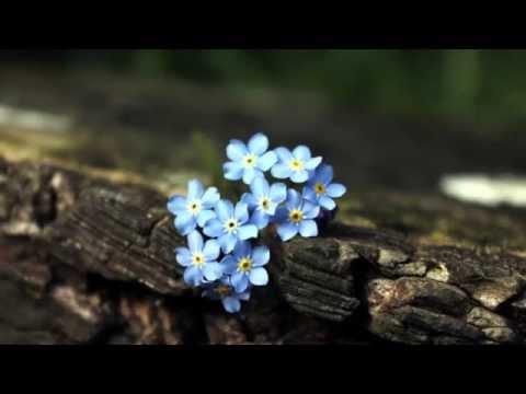 Déo Rian - MiosÓtis - Ernesto Nazareth - Gravação De 1970 video