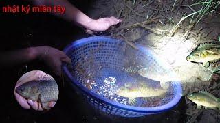 TÔI BẮT CÁ RÔ ĐỒNG CHÚA chỉ với cái rổ này thôi | miền tây mùa này bắt cá đã luôn fishing NKMT 364