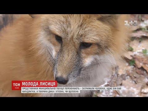 На Київщині розгорівся скандал під час візиту чоловіка із лисичкою до супермаркету
