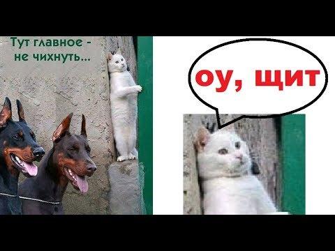 Лютые приколы. Леонид Аркадиевич ШАУРМОВИЧ и ГОРОХОВОЕ мороженое