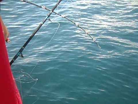 Panama city beach fishing trips deep fishingcool breeze for Deep sea fishing in panama city beach
