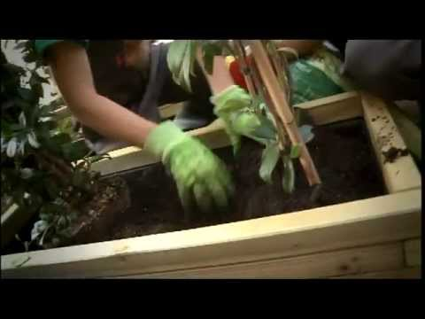 ShoWooD - Κηπουρέματα Φύτευση Ξύλινης Ζαρντινιέρας